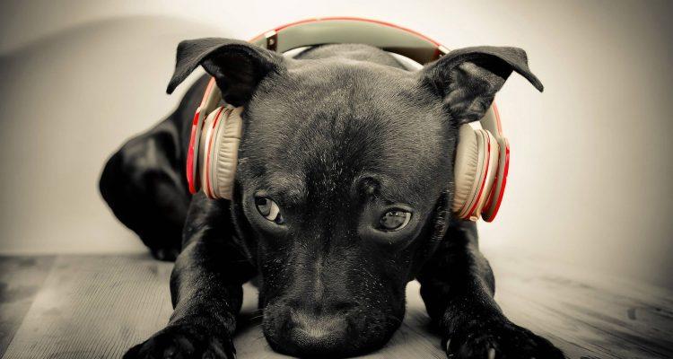dog_headphones_1920x1080