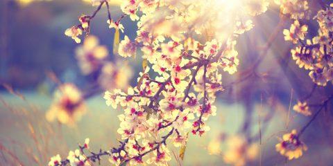 Spring-23E